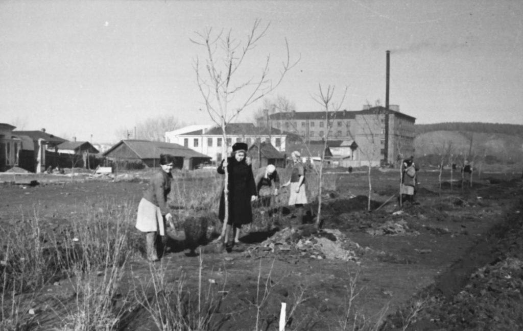 Посадка деревьев на ул. Весенней, 1952 г.